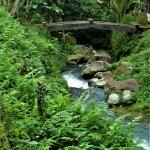Mount Kawi