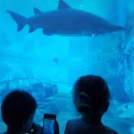 The kids checking out the shark tank