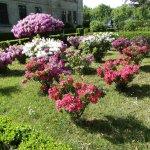 Jardines adyacentes con sus azaleas a pleno!