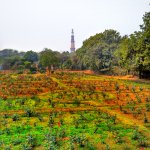 Qutub Minar from the MAP