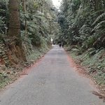 Foto de Parque Estadual da Cantareira - Nucleo Pedra Grande
