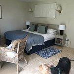 Dog garden room