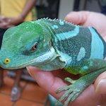A green iguana!