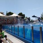 Dolphins acrobatics