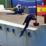 Marineland Majorca Foto