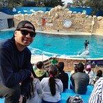 Show con delfines y leones marinos