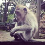 Photo de Komaneka at Monkey Forest