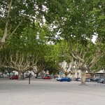 Plain Trees in the main Square in Tarascon -