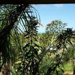 Foto di Acacia Resort Parco dei Leoni