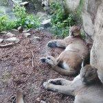 Foto de Zoo am Meer
