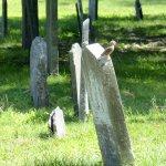 A little bird on a tombstone