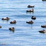 Ducks in the harbor.