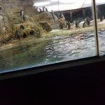 Visite des pinguins
