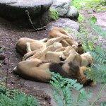 Foto di Zoo Zurich