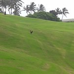 Kalapaki Golf course and the quintessential Kauai fowl
