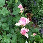 Botaniska Tradgarden Foto