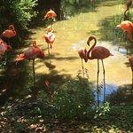 Photo de Jacksonville Zoo & Gardens
