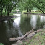 Bilde fra River View Campground