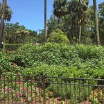 We spent an afternoon at Washington Oaks.   It is a beautiful spot.  The gardens are beautiful,