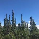 Denali National Park Campgrounds照片