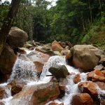 waterfalls in the rain forest
