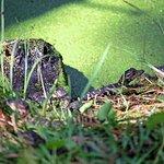 Fl Gators