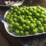 June is the right time to eat green plums