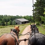 view from covered wagon ride