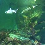 Photo of Aquarium de Vannes