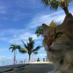 Kelapa Lovina Beach Villas Bar & Resto Foto