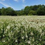 Dubwath Silver Meadows
