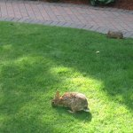 Wild rabbits inhabit the rear courtyard.