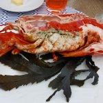 half a lobster