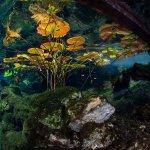 Vida Aquatica Dive Center Foto