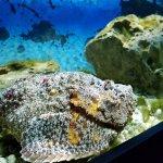 Photo of Lido di Jesolo Sea Life Aquarium
