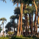 Photo de Mercure Luxor Karnak