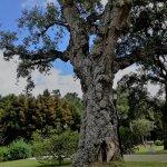 Arbol centenario del jardín