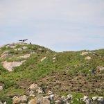 A bald eagle out at Little Fogo Island