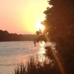 Natural Beauty of Lady Bird Lake Hike-and-Bike Trail