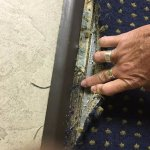 Tack strip from carpet exposed; kids stepped on sharp tacks. Never fixed when asked 1st night.