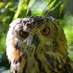 one of the many owls
