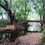 Brooloo Park