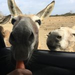 Feeding the donkeys from our car was so fun!