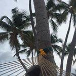 Photo of La Siesta Resort & Marina