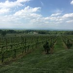 The view of the vineyard.