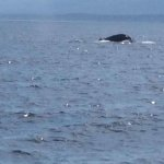 Photo of BC Whale Tours
