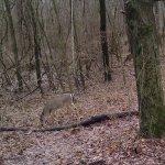 Deer near overlook