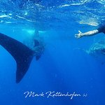 8 dives and the whale shark experience day with Scorpio Divers.