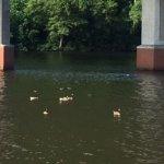 Ducks enjoying music