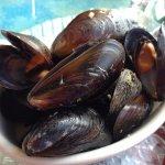 Nova Scotia mussles